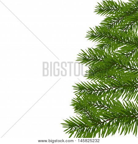 Green lush spruce branch. Fir branches. Isolated on white vector illustration