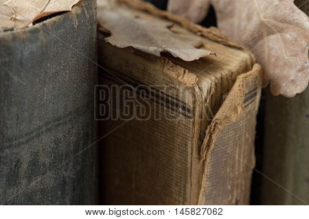 Old book on bookshelf with oak leaves close up