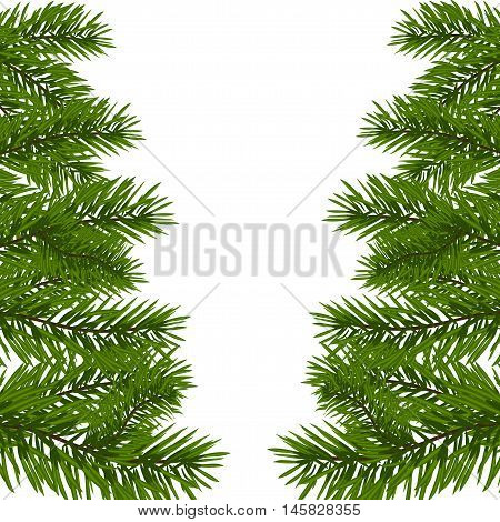 Green lush branches of spruce with the two sides. Fir branches. Isolated on white vector illustration