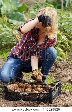 Woman Sorting Potato