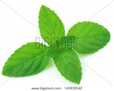 Nausea & Headache: Mint leaves especially freshly crushed leaves helps you deal with nausea and headache. The strong and refreshing aroma of mint is a quick and effective remedy for nausea.