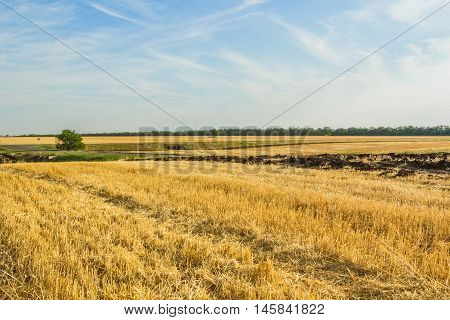Stubble field after wheat harvesting on the background of blue sky with clouds on an autumn day