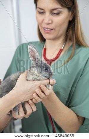 Vet Examining Cute Rabbit Held By Owner