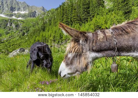 Friendship of donkey and dog.Multicultural friendship stories.