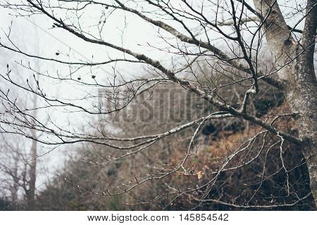 Branches with the buds are showing. mediterranean forest