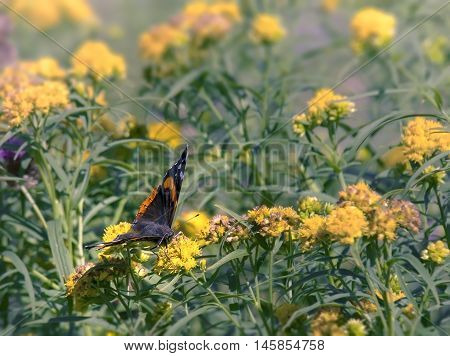 Butterfly in a field of wildflowers in Cupid's Haven, Newfoundland and Labrador