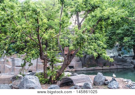 Small island with a tree, in a city park inhabited by monkeys and ducks