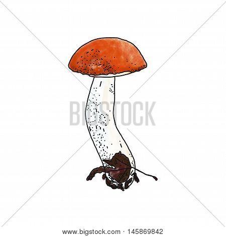 Vector illustration of Leccinum aurantiacum red cup boletus mushroom
