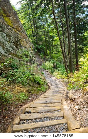 Wood and gravel steps on the refurbished Alum Cave Trail in the Great Smoky Mountains National Park