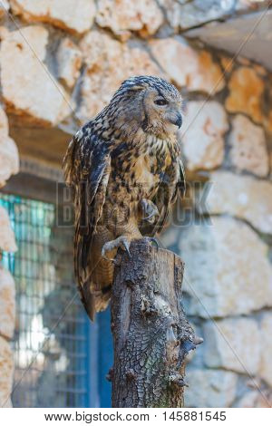 Eagle Owl Is Sitting On A Log
