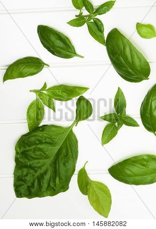 Arrangement of Various Fresh Green Lush Foliage Basil Leafs closeup on White Plank background. Top View