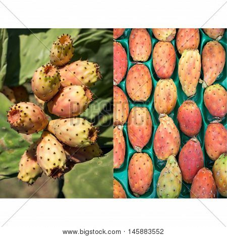 2 phothos collage of ripe prickly pear cactus fruits growing and in the box prepared for sale in the greek market. Two photos collage of prickly pear cactus fruits. Vertical. Close.