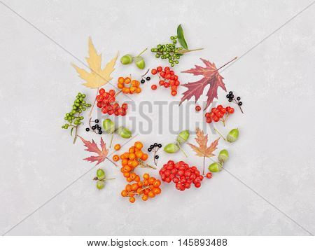 Autumn wreath from leaves rowan acorns flowers and berry on gray background from above. Flat lay style.