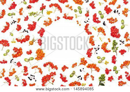 Autumn frame from rowan acorns flowers and various fruits isolated on white background from above. Flat lay styling.