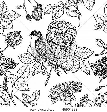 seamless pattern with roses and birds. Garden roses and swallow. Vector