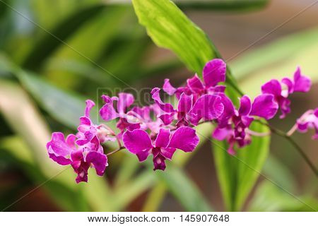 Beautiful little fuchsia orchid with soft background.