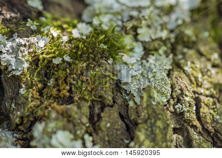 full frame bark closeup overgrown with moss and lichen