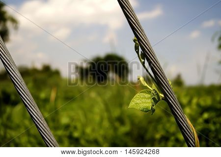 Green Young Creeping Plant Climber Under Sunlight With Beautiful Bokeh Background