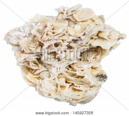 Coquina Limestone (shell Rock) Stone Isolated