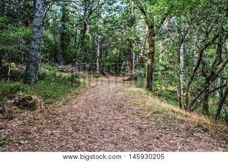 a dirt path in the forest Sardinia