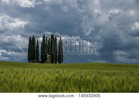 Val D'orcia Landscape