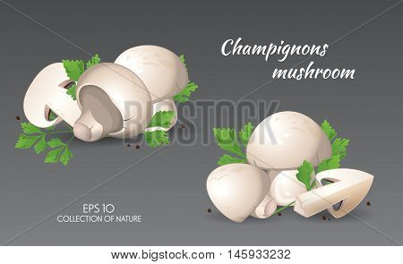 Field mushroom. Champignons. Agaricus campestris with parsley. Food and cooking collection. Vector illustration set of natural products