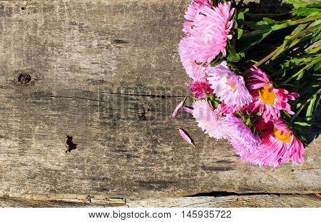 Pink aster flowers on the wooden background