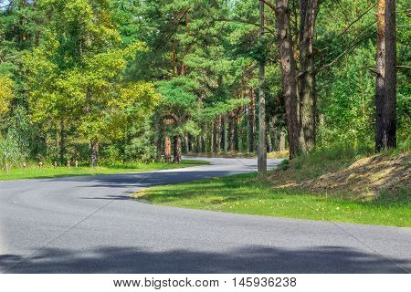 Curvy asphalt roadway in greenwood and contiferous forest park