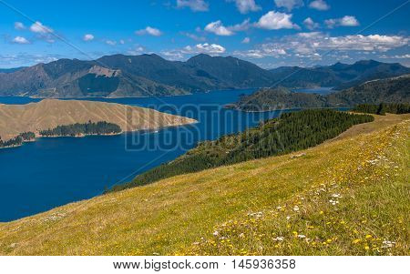 Flowers On The Slope Of Hills In The Fiords Of Fitzroy Bay Marlborough Sounds, South Island, New Zea