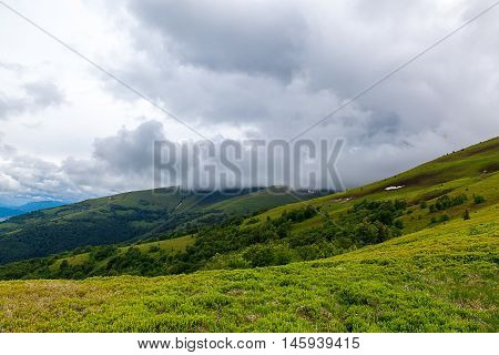 Meadow in the mountains. Mountain landscape. Nature.