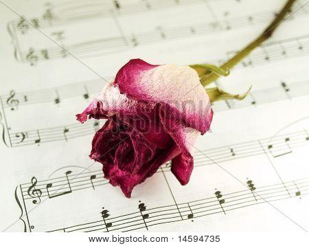 Rose seca