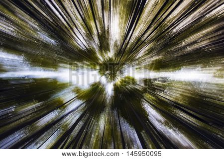 Abstract view of the bamboo trees looking up towards the sky in bamboo forest in Arashiyama, Kyoto, Japan
