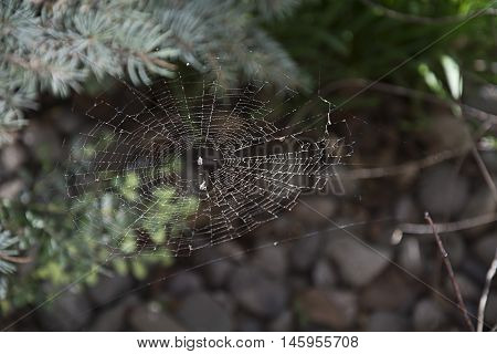 spider web spun in outdoor garden with sun streaming through