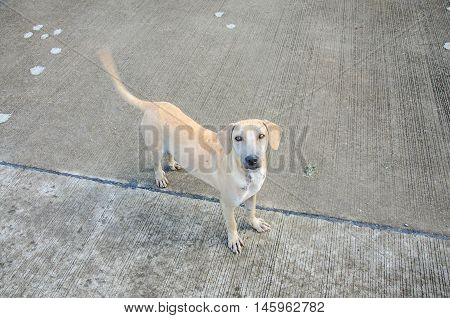 The Lovely Brown Stray Dog Homeless Portrait