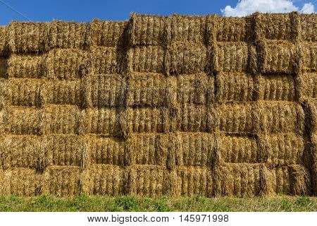 Straw or hay stacked in a field after harvesting. Straw bale wall.