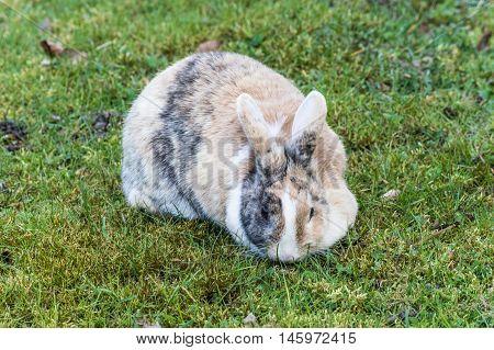 Dappled bunny rabbit sitting in the grass.