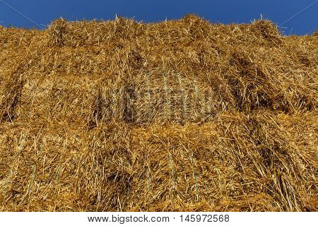 Straw or hay stacked in a field after harvesting in the sunset light. Below view.