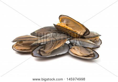 mussels mollusk food on a white background