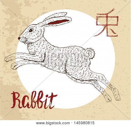 Chinese zodiac symbol of hand drawn Rabbit with lettering. Horoscope and astrological vector sign of asian new year calendar. Graphic drawing with engraved animal. Chinese hieroglyph means Rabbit