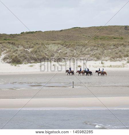 vlieland, netherlands, 15 august 2016: group of people on horseback on beach near waddenzee in the netherlands