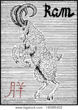 Engraved illustration of zodiac symbol with ram or goat and lettering. Horoscope and astrological vector sign of asian new year calendar. Graphic line art with animal. Chinese hieroglyph means Ram