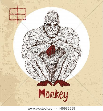 Chinese zodiac symbol of hand drawn Monkey with lettering. Horoscope and astrological vector sign of asian new year calendar. Graphic drawing with engraved animal. Chinese hieroglyph means Monkey
