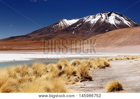 Bolivia - the most beautifull Andes in South America. The surreal landscape is nearly treeless punctuated by gentle hills and volcanoes near Chilean border. The picture present laguna Hedionda