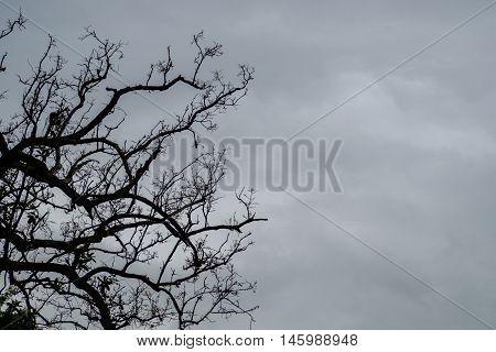 Dead trees on overcast sky in rain come