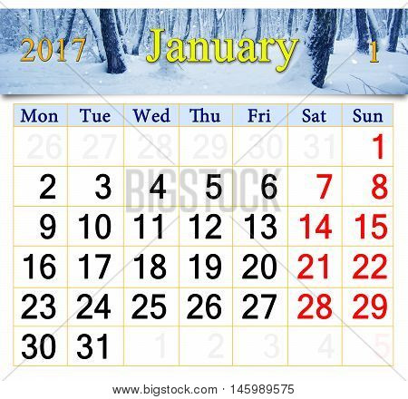 beautiful calendar for January 2017 with snowy birch grove