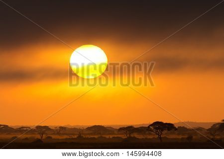Sunset in Amboseli Kenya. Silhouettes of acacia trees in front of the sun