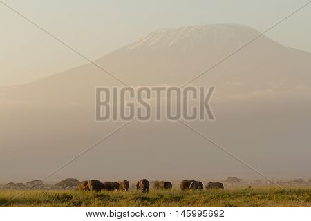 African sunset with elephants and Kilimanjaro montain in Amboseli National Park Kenya