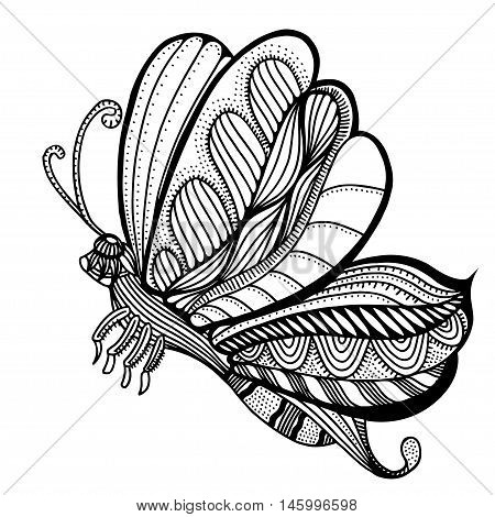 butterfly sketch. Hand drawn vector illustration. Isolated on white