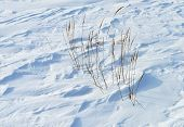 picture of firn  - Close up of windy snow surface with dry grass - JPG