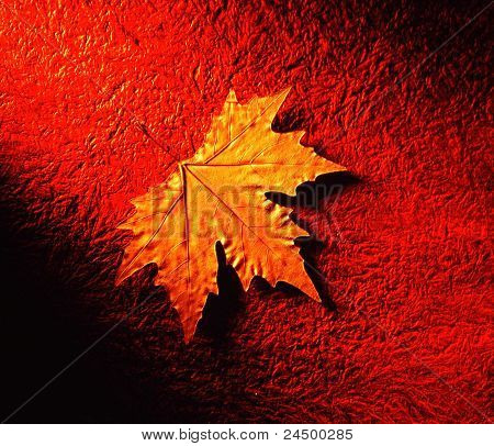 one single dried maple leaf